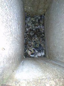 blokinio daugiabučio namo ventiliacija užkimšo balandžiai